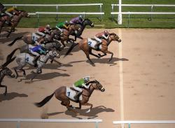 Rush horses Go